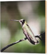 8181-001 - Ruby-throated Hummingbird Wood Print