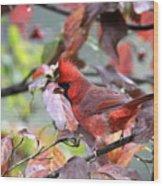 8627-002 - Northern Cardinal Wood Print