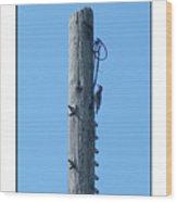 #866x Woodpecker Wood Print