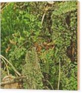 Mosses And Liverworts 8861 Wood Print