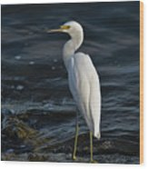89- Snowy Egret Wood Print