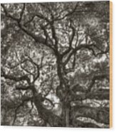 Angel Oak Live Oak Tree Wood Print