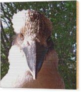 Australia - Kookaburra I'm Looking At You Wood Print