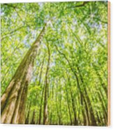 cypress forest and swamp of Congaree National Park in South Caro Wood Print