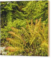 Fall Color Fern Wood Print