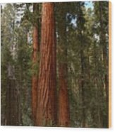 Giant Sequoia Trees Wood Print
