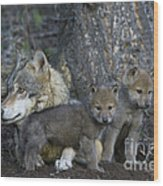 Gray Wolf And Cubs Wood Print