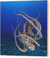 Hawaii, Day Octopus Wood Print