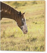 Horse In The Countryside  Wood Print