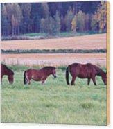 Horses Of The Fall Wood Print