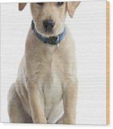 Labrador Puppy Wood Print