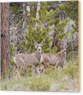 Mule Deer In The Pike National Forest Of Colorado Wood Print