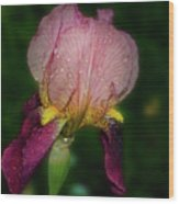 Nice Iris Wood Print