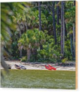 Palmetto Forest On Hunting Island Beach Wood Print