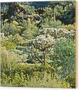 Saguaro Cactus Carnegiea Gigantea Wood Print