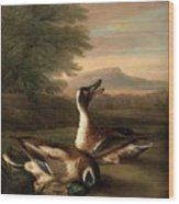 Two Drakes In Landscape Wood Print