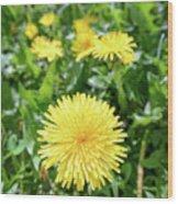 Yellow Dandelion Flowers Wood Print