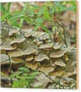 Polypores 9155 Wood Print