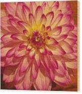 #928 D855 Dahlia Close Up Wood Print
