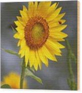 #933 D958 Best Of Friends Colby Farm Sunflowers Newbury Massachusetts Wood Print
