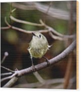 9343-00-ruby-crowned Kinglet Wood Print