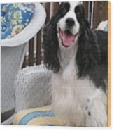 #940 D1036 Farmer Browns Springer Spaniel Happy For You Have A Happy Day Wood Print