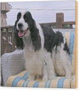 #940 D1056 Farmer Browns Springer Spaniel Wood Print