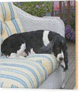 #940 D1061 Farmer Browns Springer Spaniel Wood Print