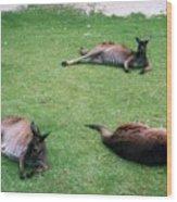Australian Native Animals Wood Print