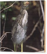 A Baby Green Heron Stretched Out Peering Into The Camera Wood Print