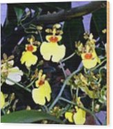 A Ballet Of Tiny Orchids Wood Print