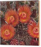 A Barrel Cactus Is Blooming Wood Print