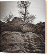 A Barren Perch - Sepia Wood Print