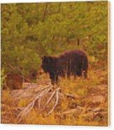 A Bear Staring At Something Wood Print