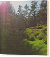 A Beautiful Day In Woods Wood Print