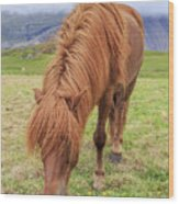 A Beautiful Red Mane On An Icelandic Horse Wood Print