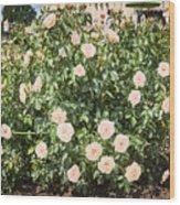 A Beautiful Rose Bush Castle Park 6 Wood Print