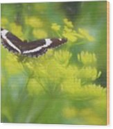 A Beautiful Swallowtail Butterfly On A Yellow Wild Flower Wood Print