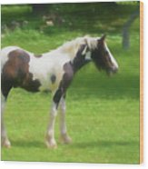 A Beautiful Young Gypsy Vanner Standing In The Pasture Wood Print
