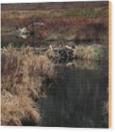 A Beaver's Work Wood Print