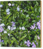 A Bed Of Blooms Wood Print