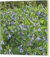 A Bed Of Bluebells Wood Print