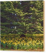 A Bed Of Narcissus Wood Print