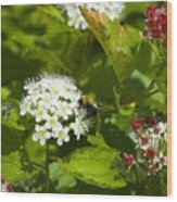 A Bee And A Fly Meet On A Flower Wood Print