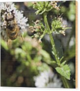 A Bee On A Flower Wood Print
