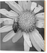 A Beetle And A Daisy  Wood Print