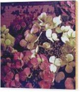 A Bevy Of Hydrangeas  Wood Print
