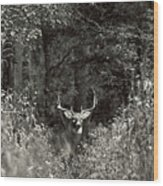A Big Buck In Rut Wood Print