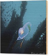 A Bioluminescent Tunicate, Catalina Wood Print