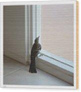 A Bird At A Plate Glass Window Wood Print